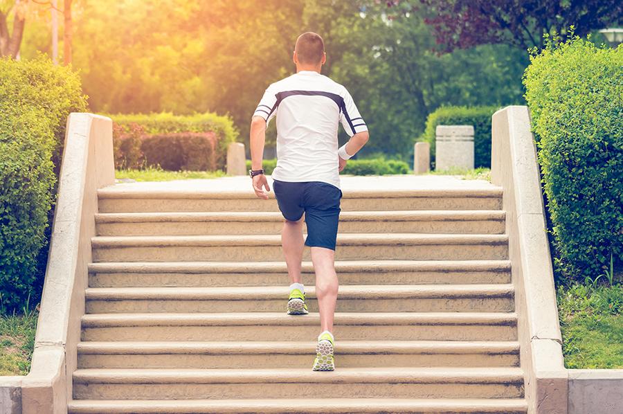 Los músculos – el motor de tu cuerpo